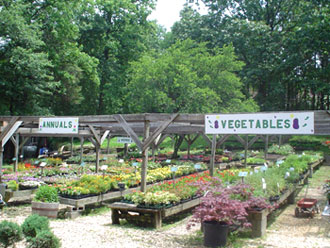 Country Nursery Annuals & Vegetables